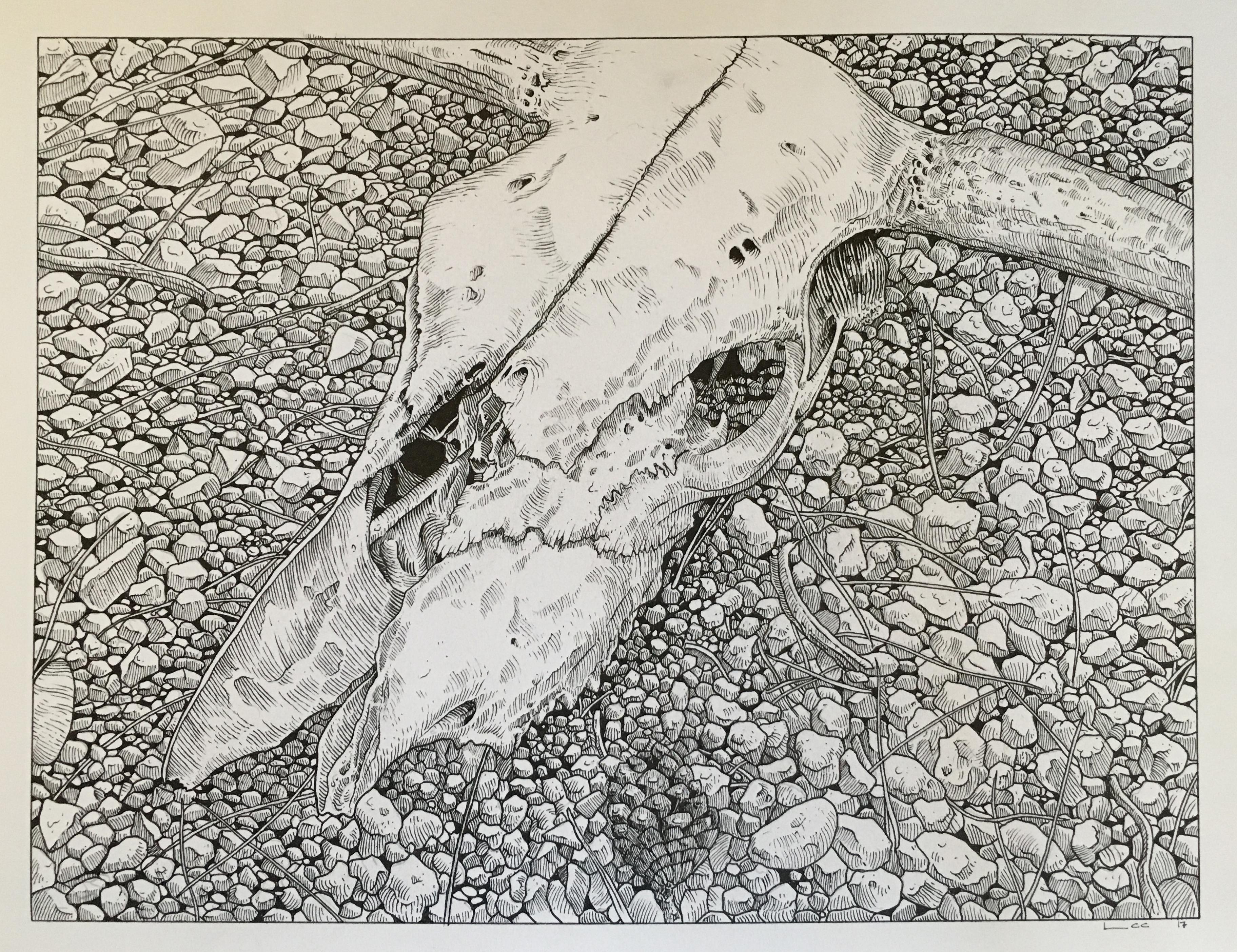 Craneo y piedras