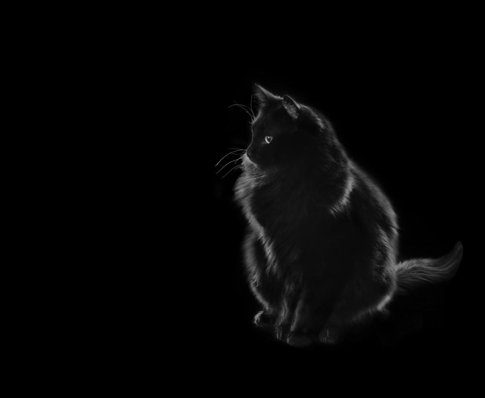 pets018w