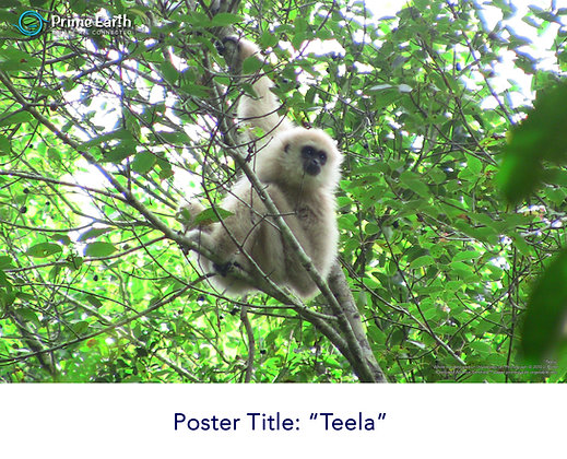 Gibbon Poster - Choose Your Own Single Poster