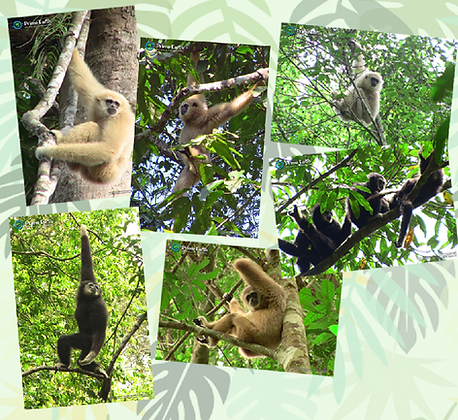 Gibbon Poster - You Choose any 4 for $30.00