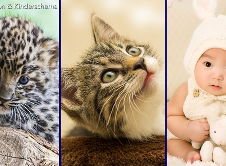 Adaptation in Action: Cat Domination and Kinderschema