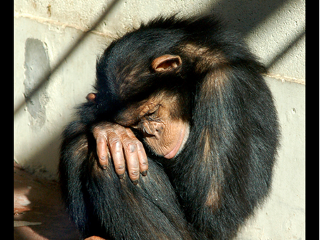 Primates Are Not Pets! Sign the Petition to Tell Google and Facebook to Stop Helping Traffickers!