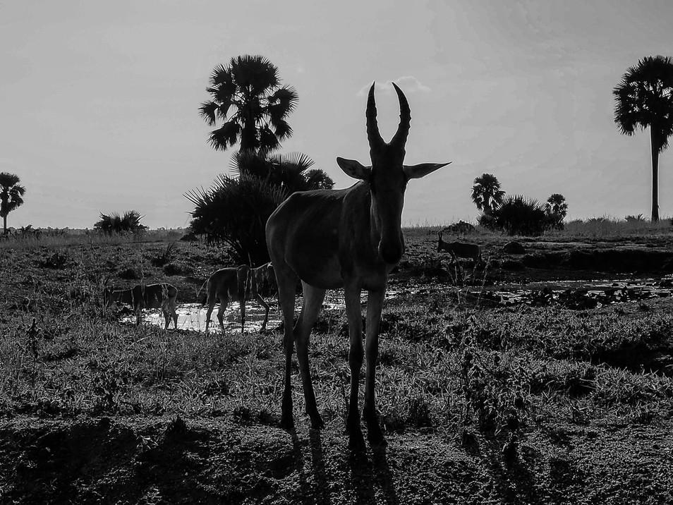 Murchison Falls Park - Uganda, 2018