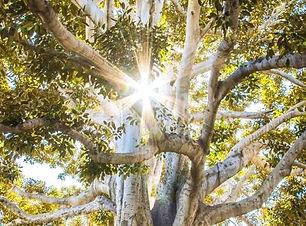 Obrazok-strom-upraveny.jpg
