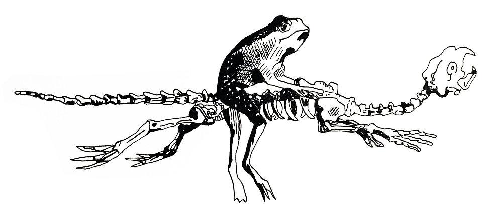 frog flying.jpg