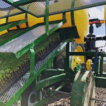 Transplanter loaded with seedlings