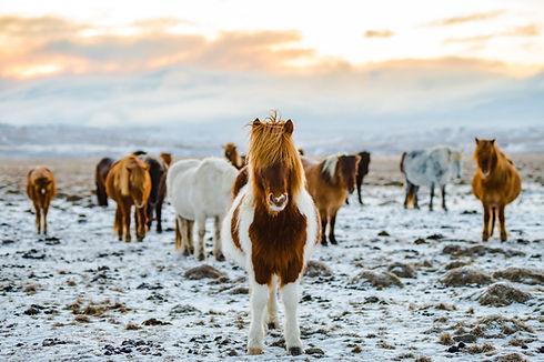 Vilda hästar
