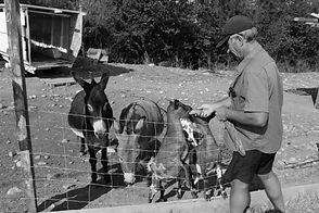 Chèvres et annes de la famille Ortola