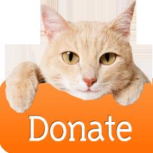 donate_cat.png