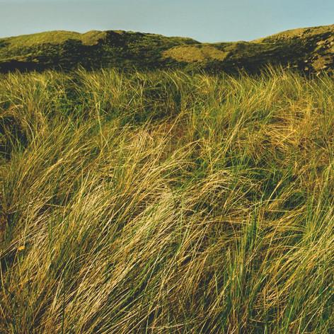 Herbe de prairie