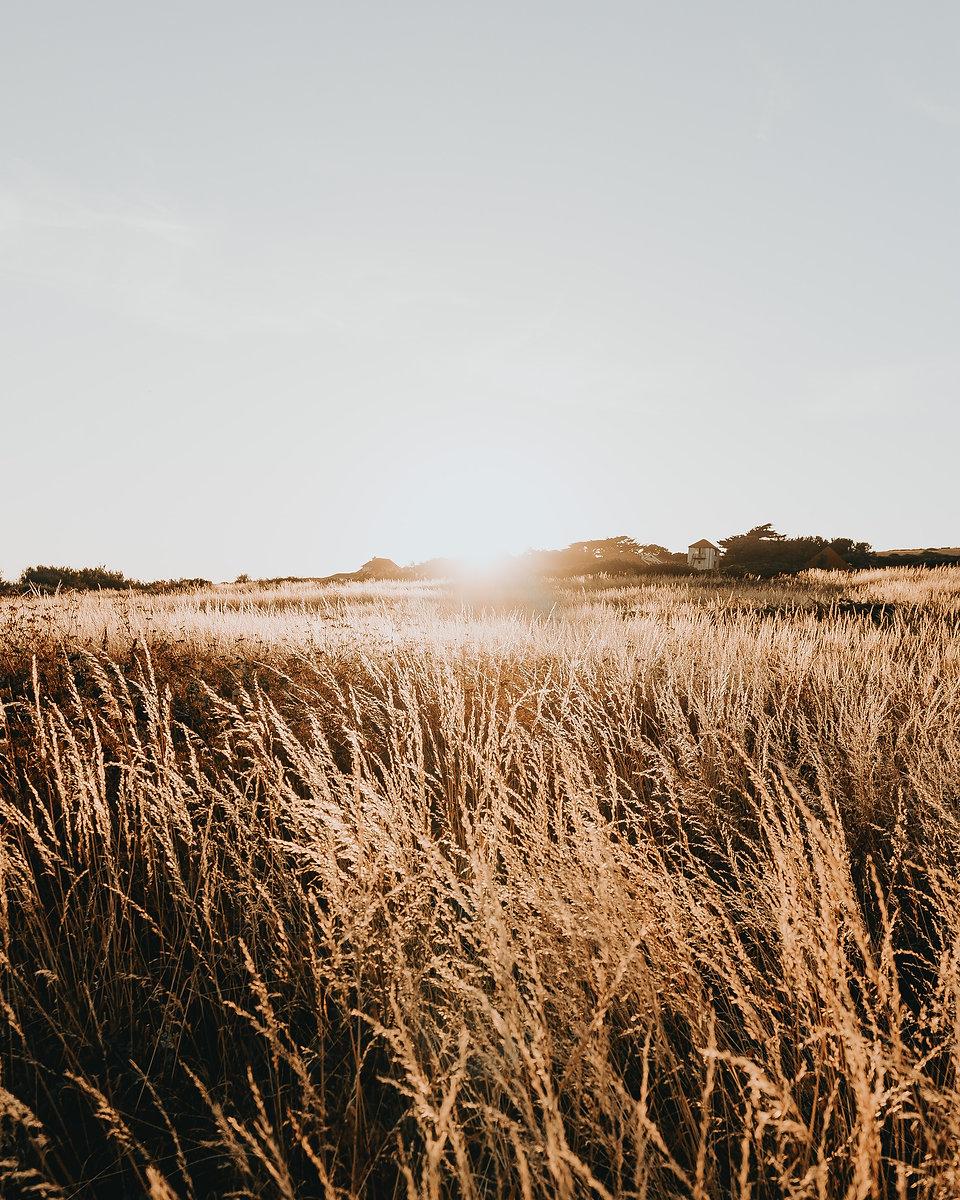 sunset-and-dry-grass-3014040.jpg