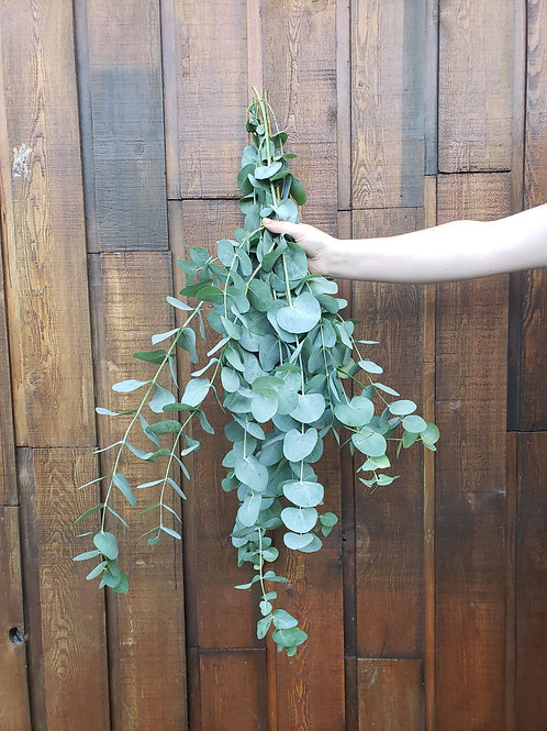 Eucalyptus Straight Bunch