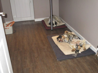 Dogs relaxing in the new Dog's Room