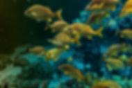 Florida - Yellow Fish 2.jpg