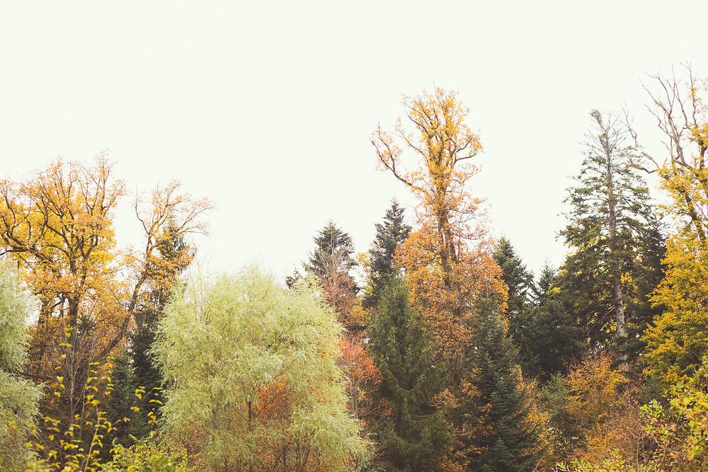 the black forest, baden baden