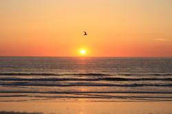 Cornish sunsets with birds