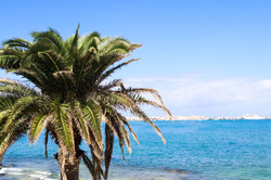 Palm trees and the ocean