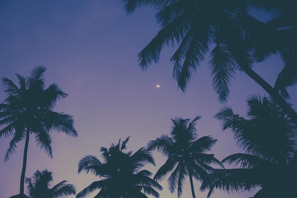 sri lanka travel wild and free blog