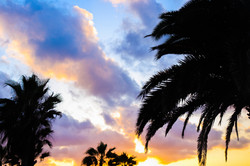 Palm trees and sunset view