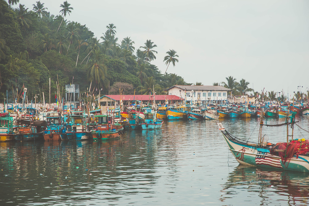 mirissa sri lanka wild and free travel blog