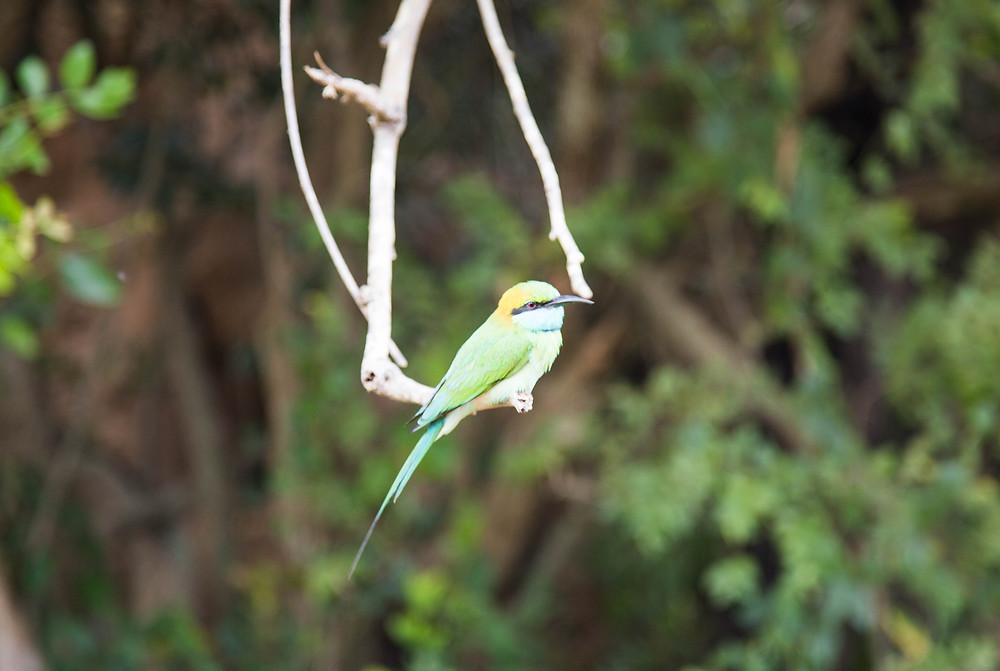 sri lanka wild and free blog