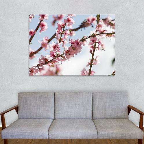 Pfirsichbaum Blüten - 0064