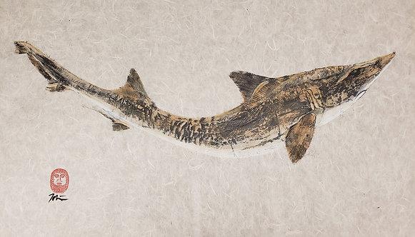Smooth Dogfish Gyotaku