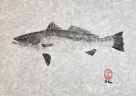 Weakfish Gyotaku