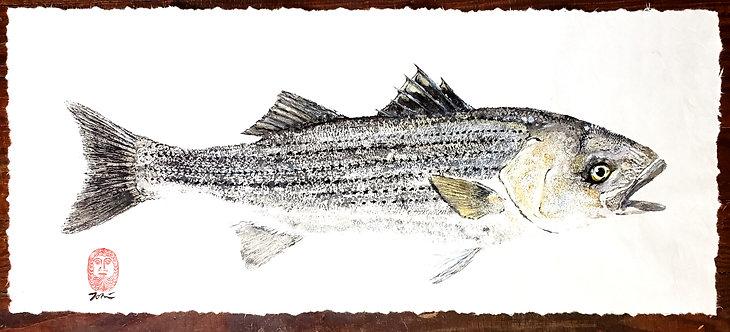 Schoolie Striped Bass Gyotaku