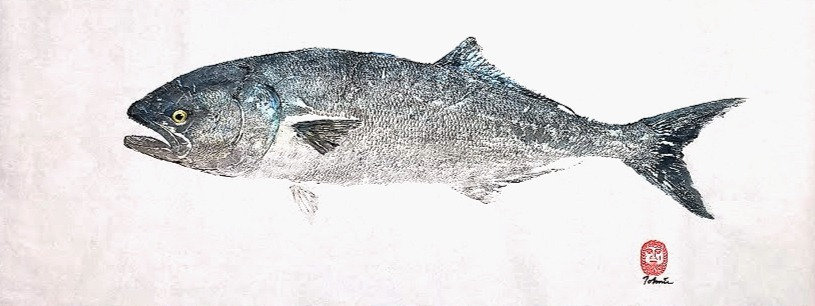 Original Bluefish Gyotaku