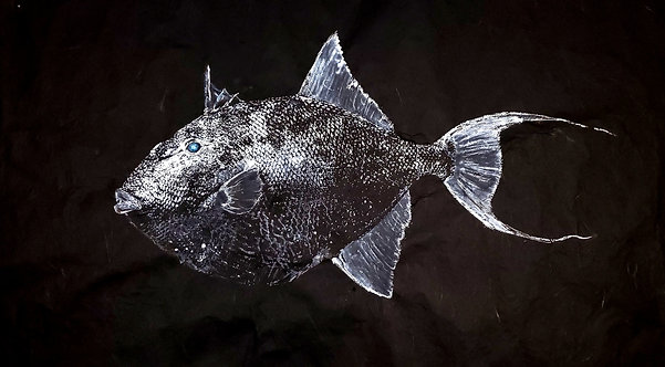 Massive Grey Triggerfish Gyotaku