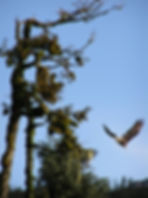 P8270732 Fleeing Eagle 2006.jpg