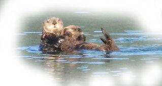 Sea Otters 2011.jpg