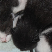 2019-04-23 six little kittens 04.jpg