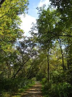 spencer creek trail 04