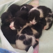 2019-04-22 six little kittens 1 day old.