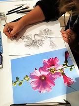 Roses trémières A.Lise.jpg