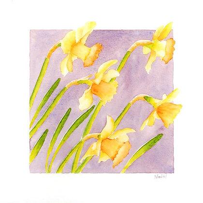 Narcisses 20x20 cm