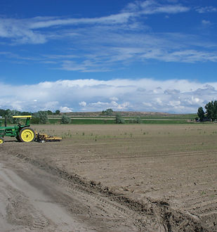 New Planting South of Homesite.JPG