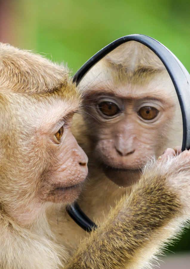 closeup-photo-of-primate-1207875.jpg