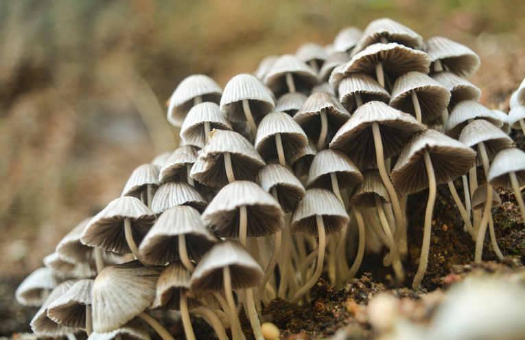 closeup-photo-of-white-mushrooms-382040.