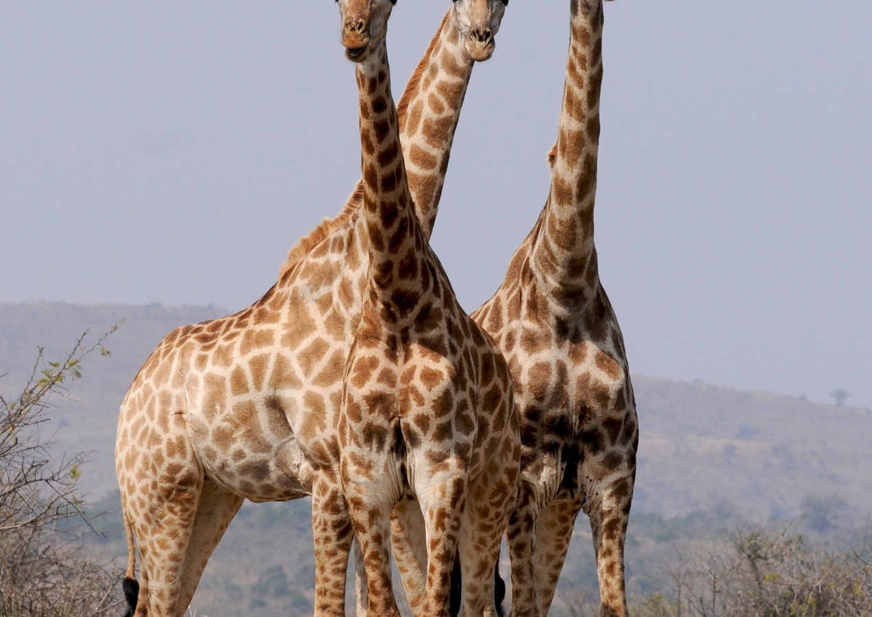 pattern-formation-wild-animals-south-afr