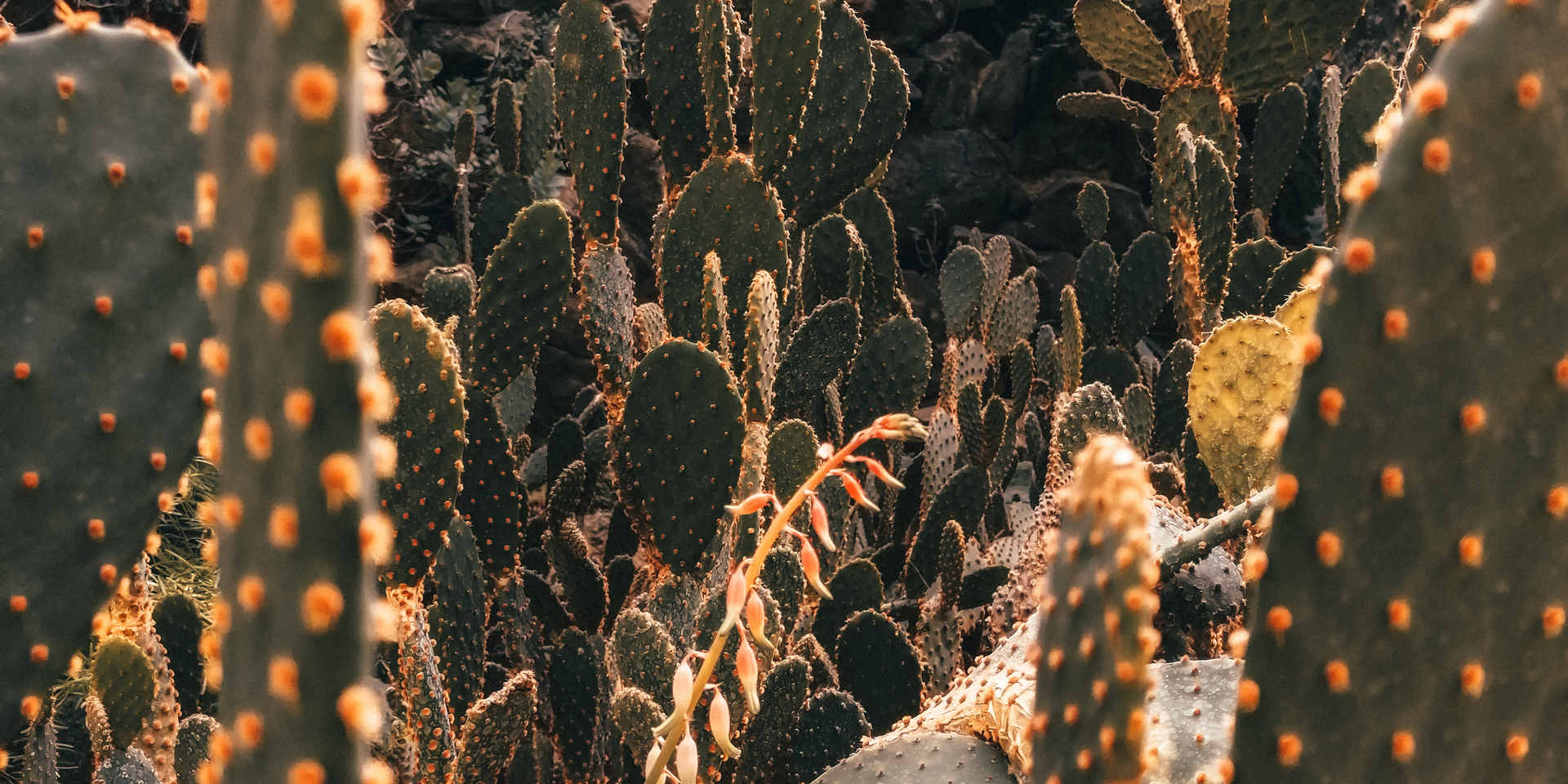 brown-cactus-plants-3779470.jpg