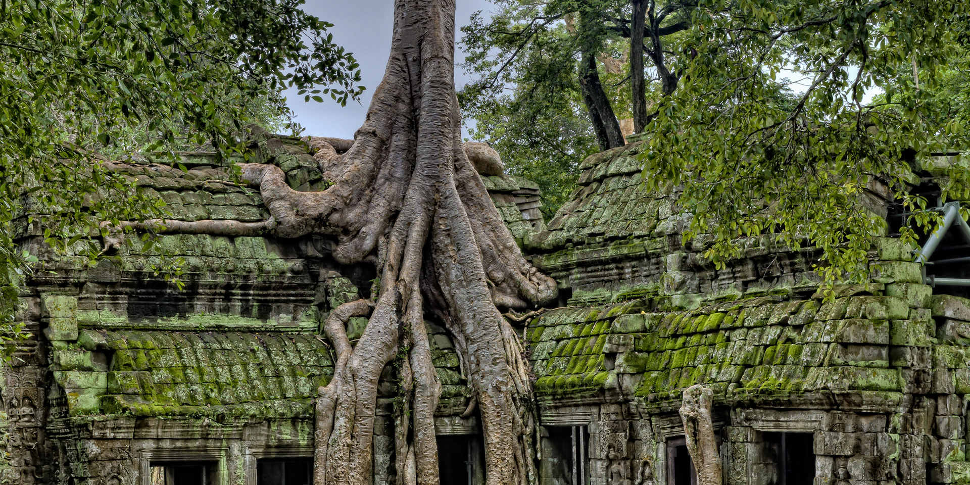 building-with-tree-1534057.jpg