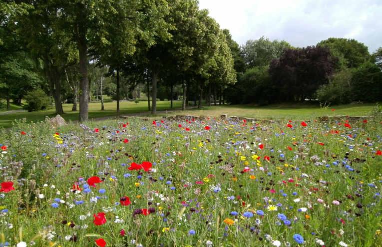 beautiful-environment-field-flora-570041