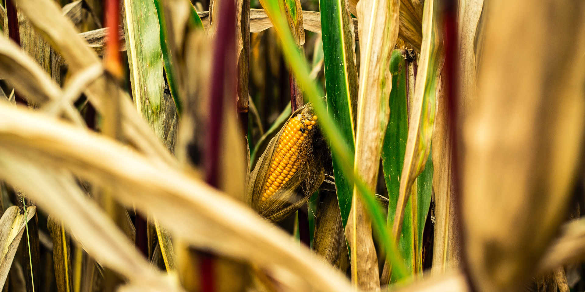 agriculture-blur-bright-cereal-614006.jp