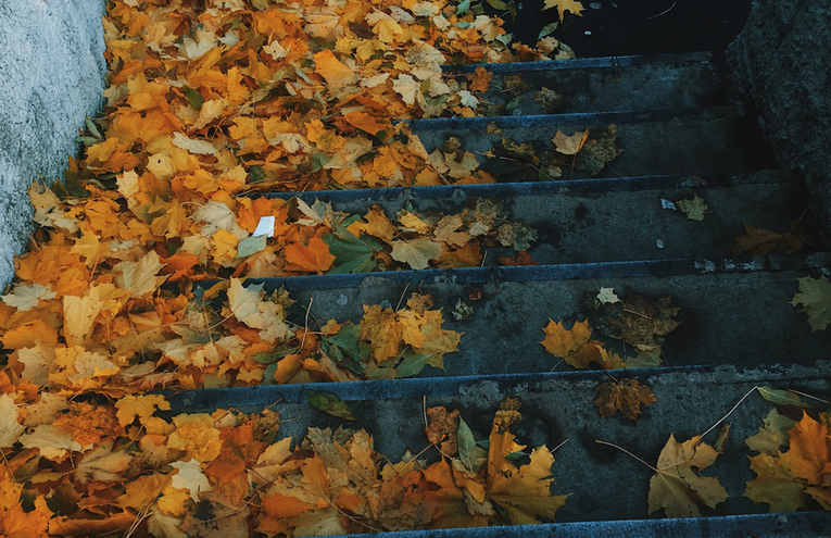 autumn-leaves-on-concrete-stairs-3979188