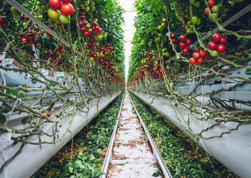 food-healthy-landscape-tomatoes-2818573.
