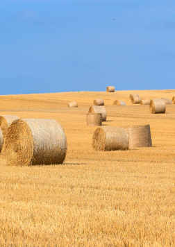 agriculture-arable-bale-countryside-2893