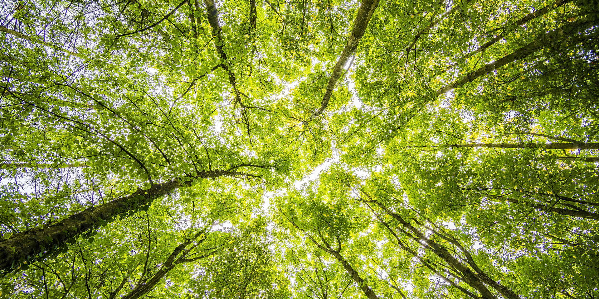 worms-eyeview-of-green-trees-957024.jpg